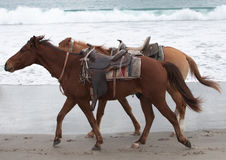 Horse trot Royalty Free Stock Image
