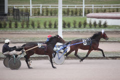 Horse trot racing Moscow hippodrome Royalty Free Stock Images