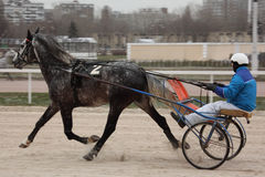 Horse trot racing on Moscow hippodrome Stock Images