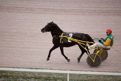 Horse trot racing on Moscow hippodrome Royalty Free Stock Photo