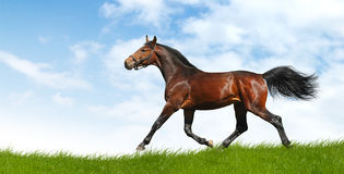 Horse trots. Horse in a field - realistic photomontage Royalty Free Stock Image