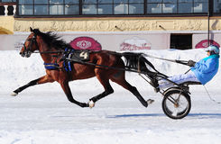 Horse trotter breed on the racetrack in the winter. Horse trotter breed in motion on the Moscow racetrack in the winter Royalty Free Stock Photo