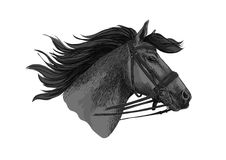 Horse trotter in bridle racing vector sketch Stock Images