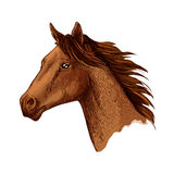 Horse trotter head vector sketch symbol Stock Photography