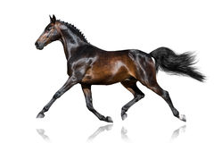 Horse trotting  Stock Photography