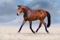 Horse trotting in desert Royalty Free Stock Photography