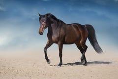 Horse trotting in desert field stock photo