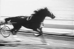 Horse trotting in harness race stock footage