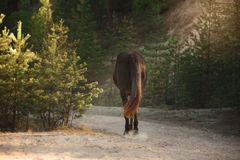 Horse trotting in a meadow Royalty Free Stock Photo