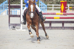 Horse trotting after overtake the obstacle Stock Photos
