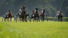 Horse trotting race Royalty Free Stock Photos