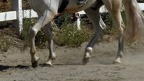 Horse Trotting in Slow Motion