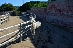 Horse trotting Stock Images