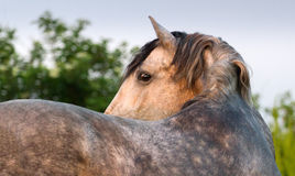Horse turn royalty free stock photography