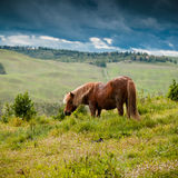 Horse in Tuscany Royalty Free Stock Photography