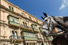 Horse And Typical Maltese Building Royalty Free Stock Photography