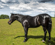 Horse. Uk kent heritage horse english Royalty Free Stock Photos