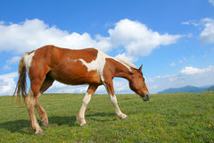 Horse under sky Stock Images