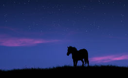 Horse under sky with stars and purple clouds at night Stock Image