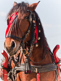 Horse under the spring sun Royalty Free Stock Photo