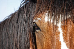 Horse Untamed Stock Images