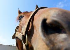 Free Horse Up Close Stock Photo - 24747160