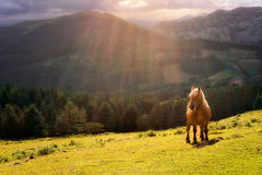 Horse in Urkiola mountains Stock Images