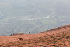 Horse and valley Stock Image