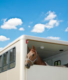 Horse in the van. On bright summer day royalty free stock image