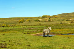 A horse on The vast grassland Royalty Free Stock Images