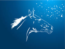 Horse vector Stock Photography