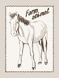 Horse vector hand drawn Royalty Free Stock Images