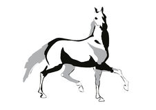 Horse vector illustration. Horse drawing,  on white background, vector illustration Stock Image