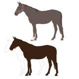Horse 3 Stock Photo