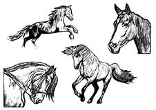 Horse vector illustrations Royalty Free Stock Images
