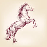 Horse vector llustration Royalty Free Stock Photo