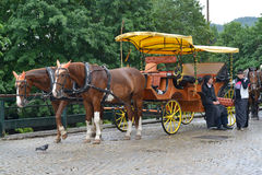 Horse vehicle for driving of tourists in Karlovy Vary, the Czech Stock Image
