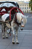 Horse and a vehicle for walks royalty free stock photos