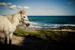 Horse view Stock Image