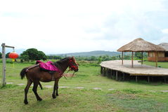 Horse in the village Royalty Free Stock Photo