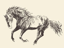 Horse Vintage Engraved Illustration, Hand Drawn Royalty Free Stock Photo