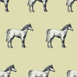 Horse, vintage engraved vector seamless pattern. Can be use for shops and markets of organic food. Vintage illustration. Stock Photo