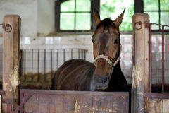 Horse in the vintage stable in the country Royalty Free Stock Photography
