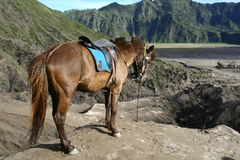 Horse in the volcanoes. Area royalty free stock photos
