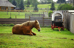 Horse and wagon. Horse lazing in the field in Heritage Park, Calgary, Alberta, Canada royalty free stock photos