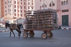 Horse and wagon Marrakesh Morocco Stock Images