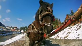 A horse and wagon stands. Big horse face. Pulled by horse stands against a blue sky. Taken with a GoPro stock footage