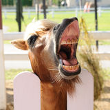 Horse are waiting with open mouth to eat Stock Photos