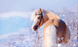 Horse on walk. Stock Images