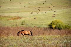 Horse walking in autumn prairie Royalty Free Stock Images